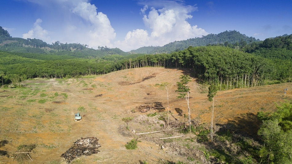 the drive of deforestation from mining projects