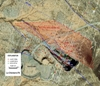 Timmins Gold Reports Drilling Results from La Chicharra Open Pit